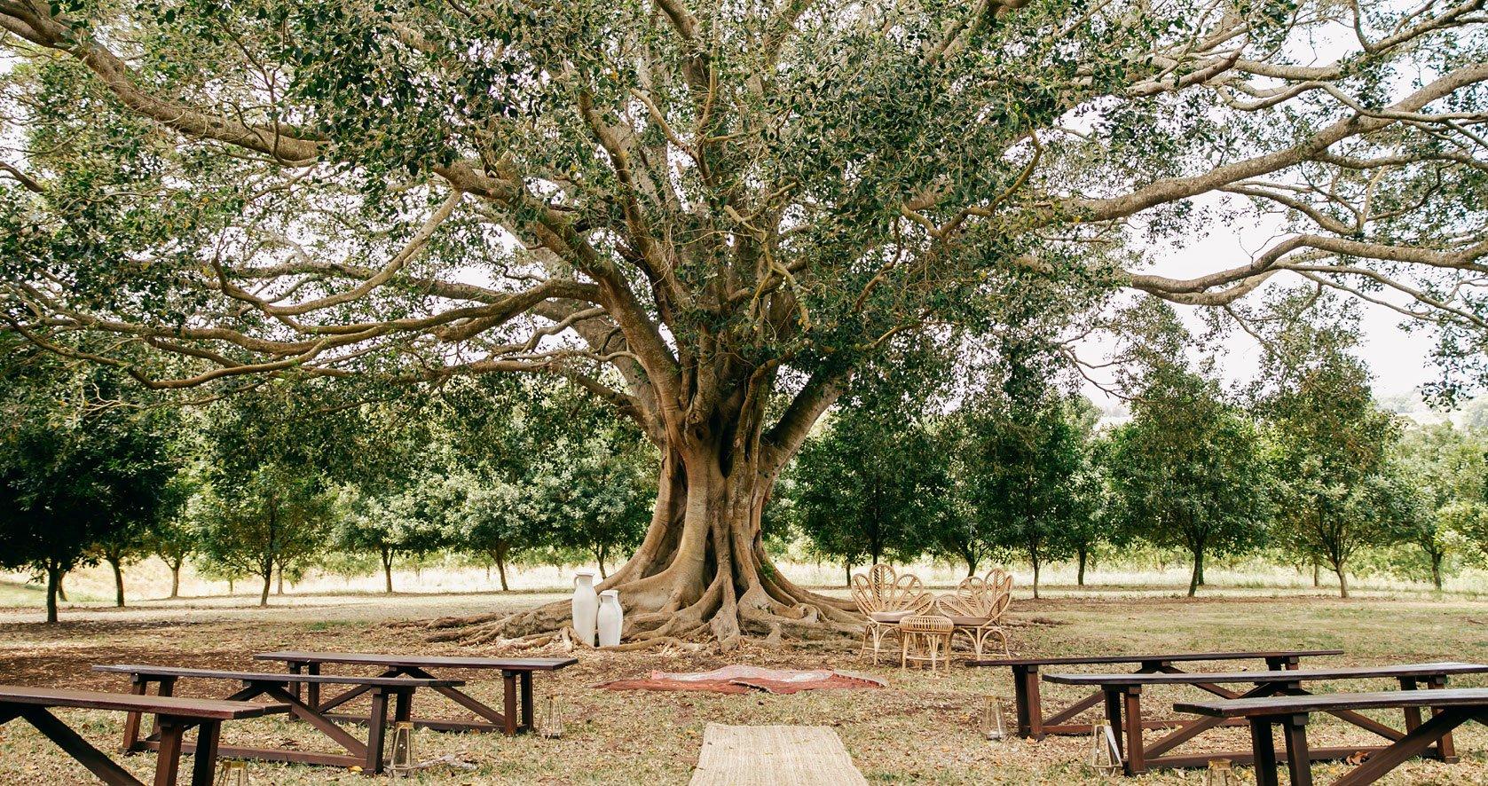 Summerland House Farm – Alstonville