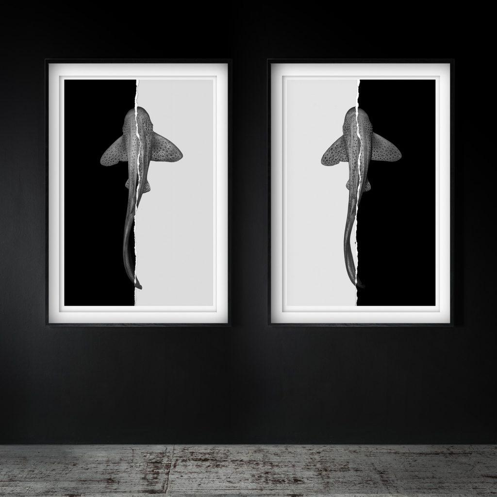 Peek Gallery