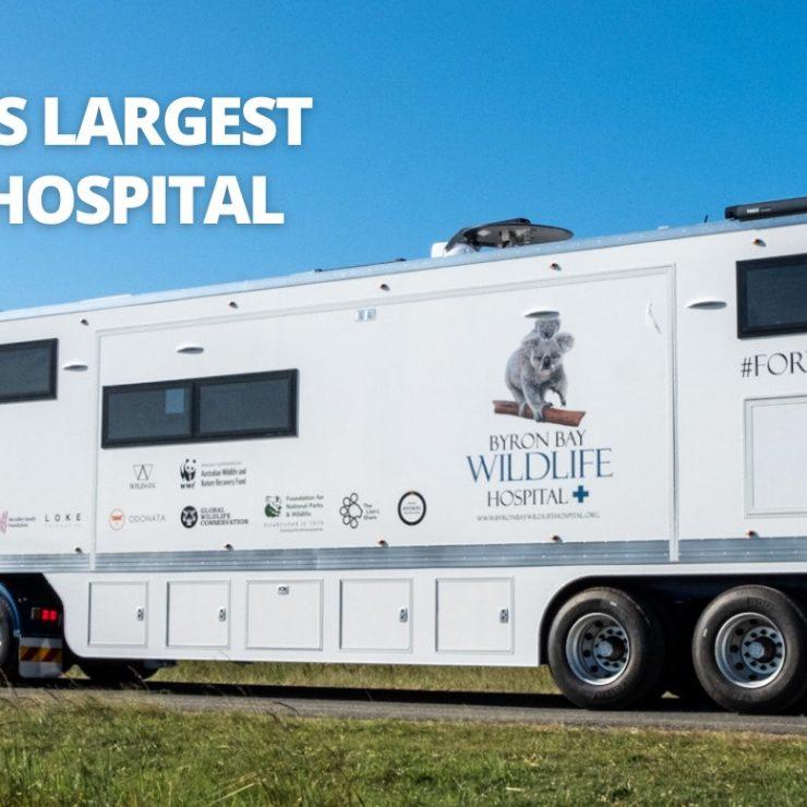 Byron Bay Mobile Wildlife Hospital